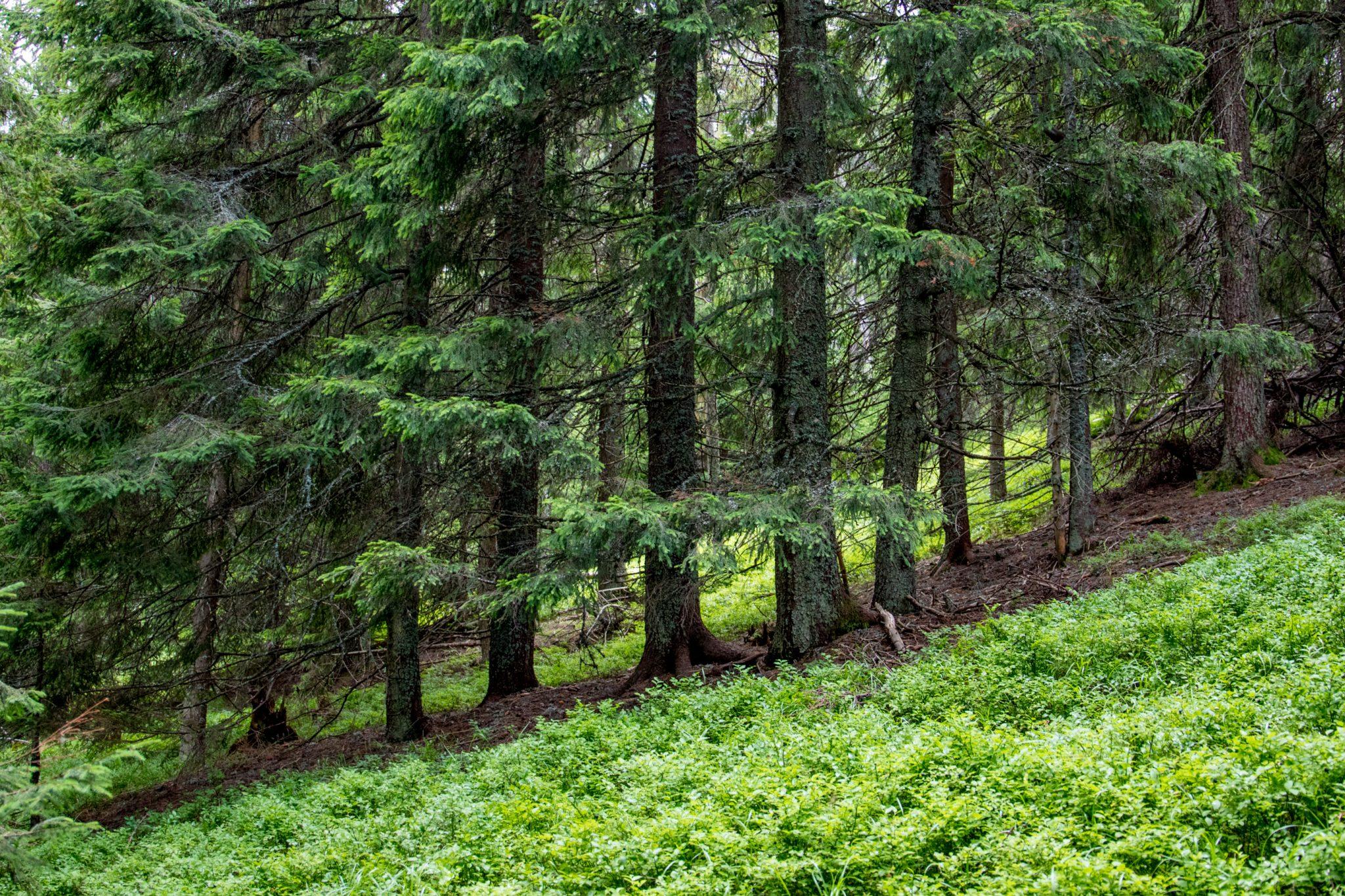 A fost adoptat Regulamentul de valorificare a masei lemnoase din fondul forestier proprietate publică